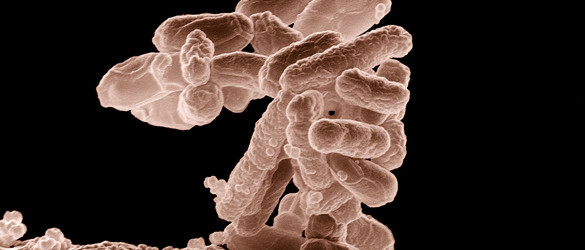 Gut Bacteria Could Be Key Indicator of Colon Cancer Risk